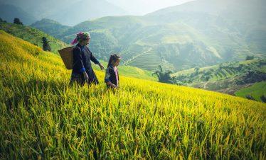 Vietnam en 15 días